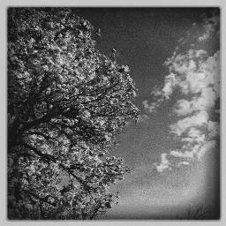 photo naturallight iPhone6 iphoneart blackandwhite inspire instablackandwhite bw_society bw_society bwsquare bw_lover bwwednesday bw_photooftheday bwstyleoftheday bw_lover bnw_madrid bnw_society bnw_greatshots bnw_life iphonegraphy iphonephotography iphoneart noir_shots clouds tree sky sky_captures sunset