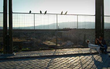 birds pointer hunter tourists sunset