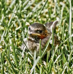 angeleyesimages bird birdie babybird nature freetoedit
