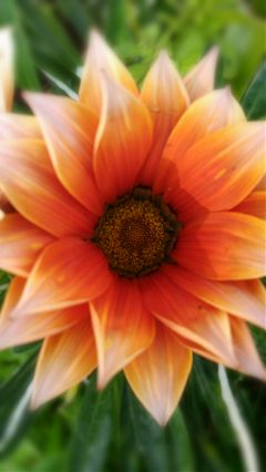 flower orange freetoedit