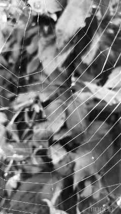 freetoedit spiderweb autumn inmygarden