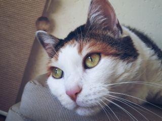 freetoedit cat mycat💞 ilovemycat mycat