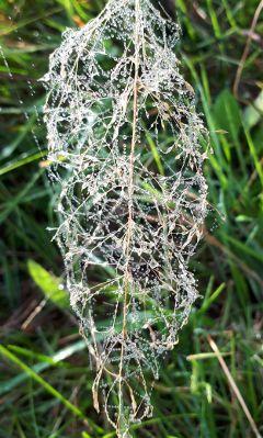 freetoedit dewdrops fall